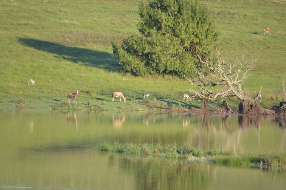 Greystone Lodge - Dullstroom Accommodation
