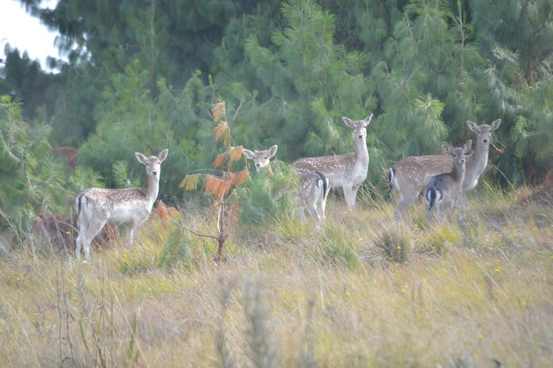 Greystone Lodge - Dullstroom Accommodation - Wildlife and Nature