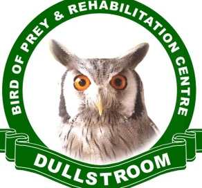 bird of prey rehabilitation centre dullstroom